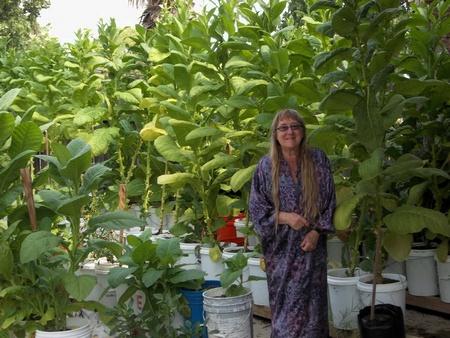 Rain Gutter self-watering container garden system ⋆ SS Prepper