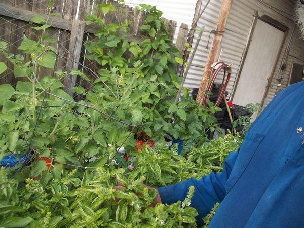 Rain gutter self watering container garden system ss prepper - Self watering container gardening system ...