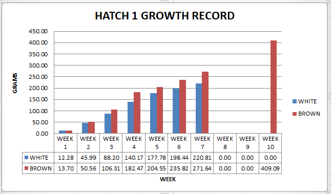 Quail Growth record of our first hatching of jumbo and Texas A&M quail